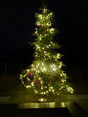 Studentenwohnung-Garching-Weihnachtsbaum-