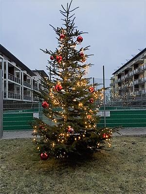 Studentenwohnung-Garching-Weihnachtsbaum-GLC